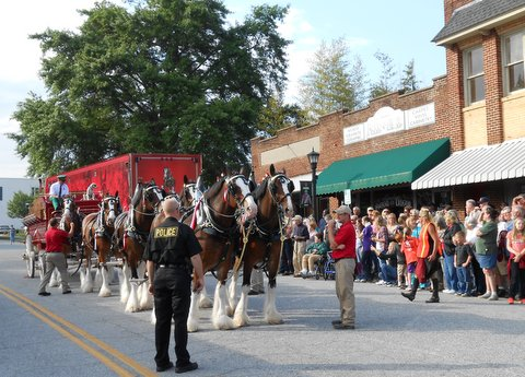 The Budweiser Clydesdales are ready to parade in Landrum, SC.