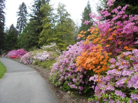 The azaleas were in full bloom in May 2015.