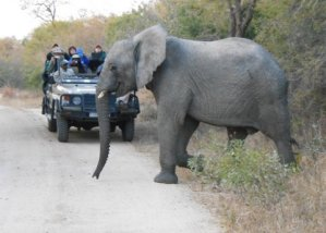 On safari in South Africa
