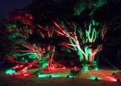 Holiday tree lights at Morton Arboretum, Lisle