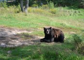 Waiting for dinner at Oswald's Bear Ranch, UP, Michigan