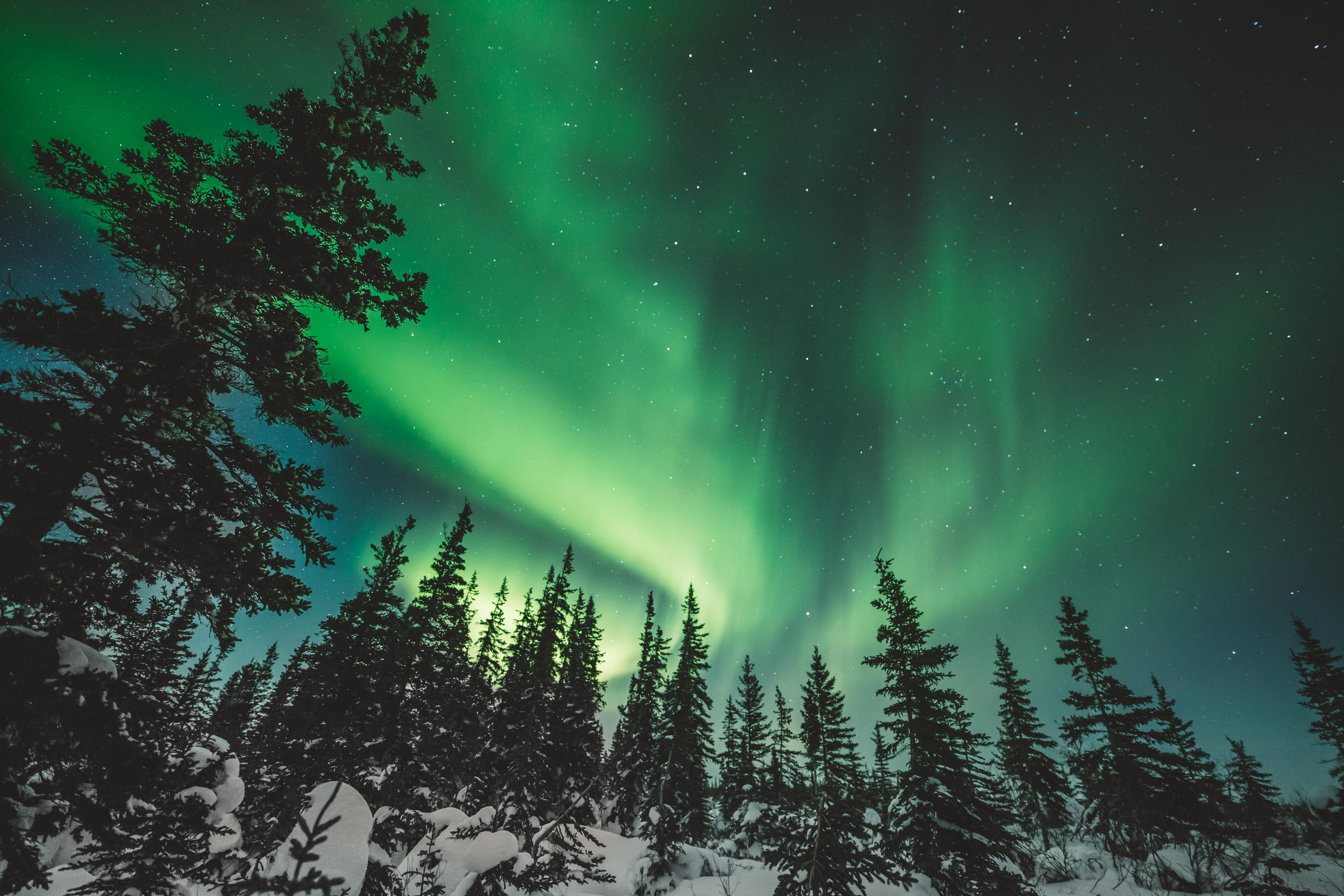 A row of pine trees with green Northern Lights against a darkened sky.